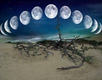 Pustynne księżyc obrazy royalty free