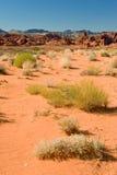 pustynni krajobrazowi krzaki Zdjęcie Stock