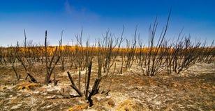 Pustynni krzaki po pożaru w Utah Obrazy Stock