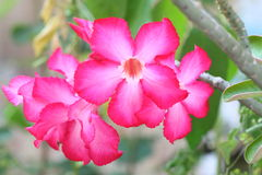 pustynni kwiaty wzrastali Zdjęcia Royalty Free