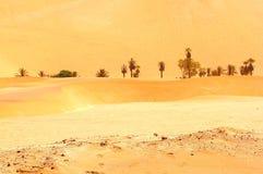 Pustynni oaz drzewka palmowe, Namib Naukluft park narodowy, Namibia Zdjęcie Royalty Free