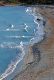 pustynny beache w Agriates wybrzeżu Obraz Royalty Free
