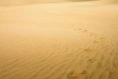 pustynny daleko wydm olbrzym jak wygląda nowy północnej Zelandii Północny Nowa Zelandia Obrazy Royalty Free