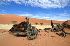 pustynny deadvlei namib Namibia Zdjęcia Royalty Free