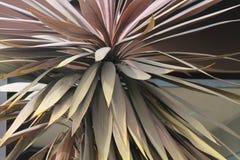 Pustynny drzewko palmowe Zdjęcie Royalty Free