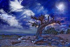 Pustynny drzewo przy nocą Obraz Royalty Free