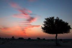 pustynny Dubai diun zmierzch zdjęcie royalty free
