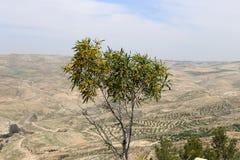 Pustynny góra krajobraz, Jordania, Środkowy Wschód (widok z lotu ptaka) Obraz Royalty Free