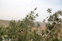 Pustynny góra krajobraz, Jordania, Środkowy Wschód (widok z lotu ptaka) Fotografia Royalty Free