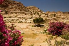 pustynny Jordan Zdjęcia Royalty Free
