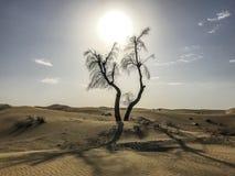 pustynny Jordan petra fotografii skały drzewo Zdjęcia Royalty Free