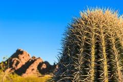 Pustynny kaktus obraz royalty free