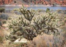 Pustynny kaktus Fotografia Royalty Free
