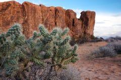 Pustynny kaktus zdjęcia stock