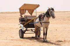 pustynny koń Fotografia Stock