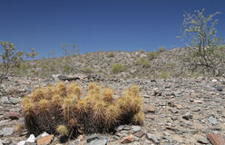 Pustynny krajobraz z kaktusem Zdjęcia Royalty Free