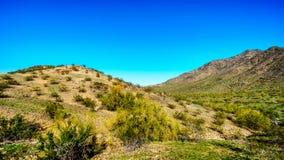 Pustynny krajobraz z Saguaro kaktusami wzdłuż Krajowego śladu blisko San Juan śladu głowy w górach Południowy góra park Zdjęcia Royalty Free