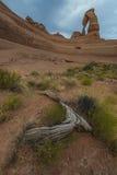Pustynny Krajobrazowy Delikatny łuk Fotografia Stock