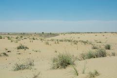 Pustynny lansscape widok z dorośnięcie roślinami Fotografia Stock