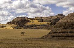 Pustynny Libya Zdjęcie Royalty Free