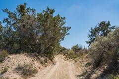 Pustynny muśnięcie w Mojave pustyni pustkowiu Zdjęcia Royalty Free