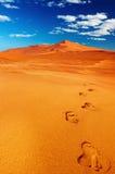 pustynny namib Fotografia Royalty Free