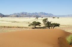 pustynny namib Obraz Royalty Free