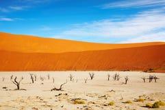 pustynny namib Obraz Stock
