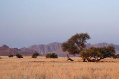 pustynny namib Zdjęcie Royalty Free
