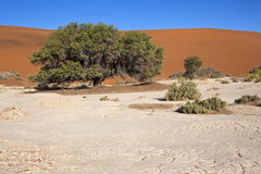 pustynny namib Namibia nuakluft Fotografia Royalty Free