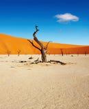 pustynny namib Namibia sossusvlei Zdjęcia Royalty Free