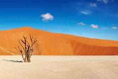 pustynny namib Namibia sossusvlei Zdjęcie Stock