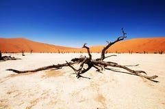 pustynny namib Namibia sossusvlei Obraz Royalty Free