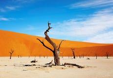pustynny namib Namibia sossusvlei Zdjęcie Royalty Free