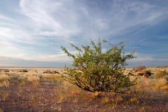pustynny Namibia rośliny niebo Fotografia Stock
