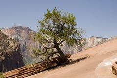 pustynny odprężny drzewo Obrazy Royalty Free