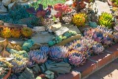 Pustynny ogród z sukulentami Zdjęcia Stock