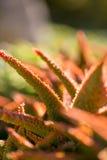 Pustynny ogród z sukulentami Obrazy Stock