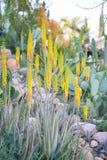 Pustynny ogród z sukulentami Zdjęcie Royalty Free