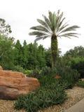 Pustynny ogródu kształtować teren Obraz Stock