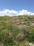Pustynny pole zdjęcie royalty free