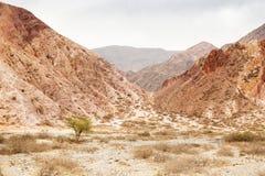 Pustynny sceniczny Zdjęcia Royalty Free