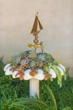 Pustynny tłustoszowaty plantatorski garnek Fotografia Royalty Free
