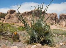 Pustynny ulistnienia kwitnienie przy południowo-zachodni obozowiskiem Zdjęcia Stock