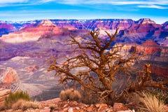Pustynny widok światu Uroczystego jaru Sławny park narodowy, Arizona Zdjęcia Stock