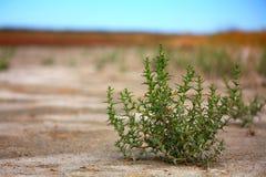 pustynny widok Zdjęcia Royalty Free