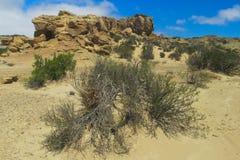 Pustynny wzgórze z krzakiem Fotografia Royalty Free