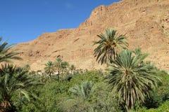 Pustynnych gór duża palmowa oaza Obrazy Royalty Free