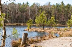 Puszczy NiepoÅ 'omicka Niepolomice las w południowym Polska zdjęcia stock