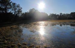 Puszek na jeziorze i gospodarstwie rolnym Fotografia Royalty Free
